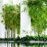 Mảng xanh trong nhà